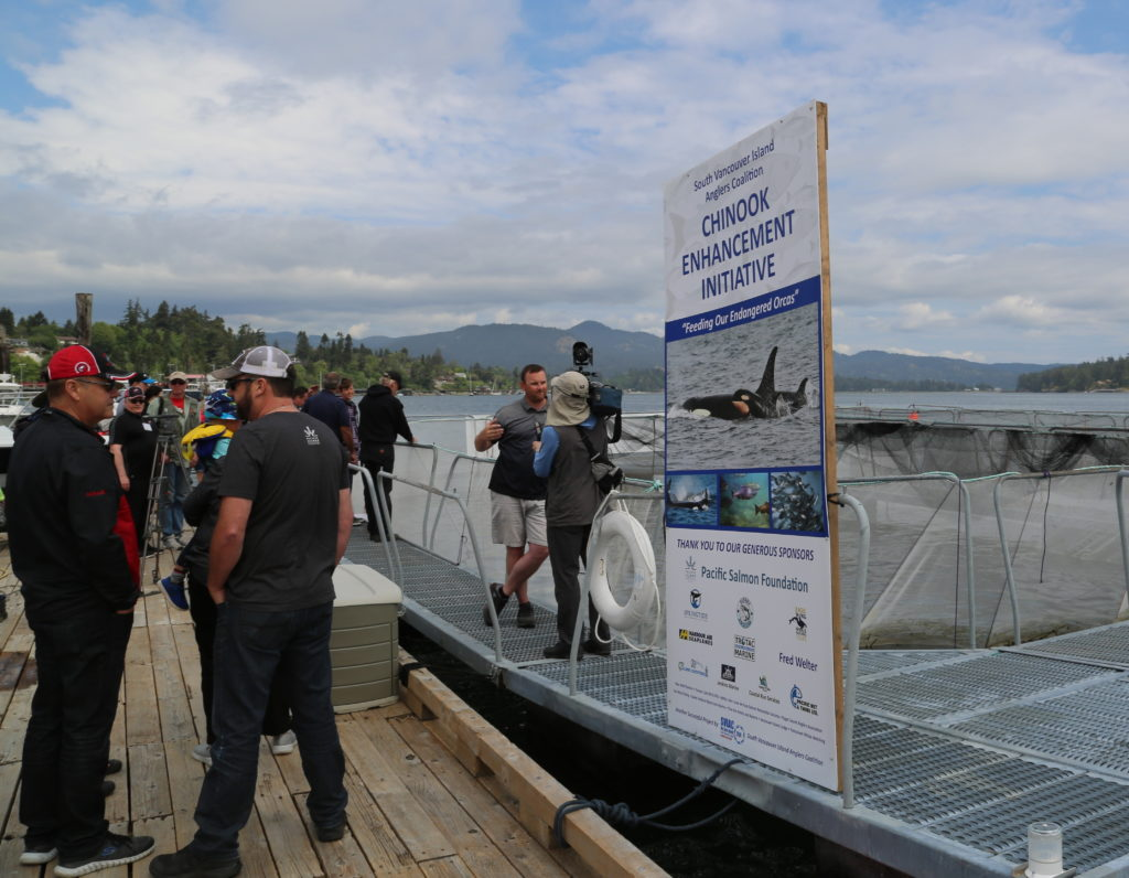 SVIAC, Fish, Advocacy, Salmon, Angling, Fishing, Halibut, Lingcod, Lobbying, Influence, Government, Chinook, Fraser, Victoria, British-Columbia, South-Vancouver-Island-Anglers-Coalition, breaking-news, updates, news-letter, news-bulletin, information, Sooke-Chinook-Enhancement-Initiative, Hatchery, Sea-Pen